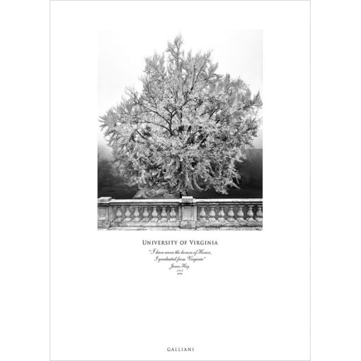 University of Virginia Ginkgo Tree Wall Art | Wall Decor