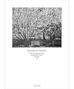 UVA-Garden-Blossoms