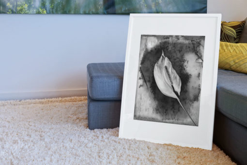 Calla-lily-print-photography-wall-art-galliani-collection-room-decor