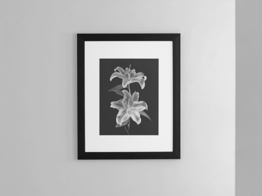 Double-Lily-print-photography-wall-art-galliani-collection-framed