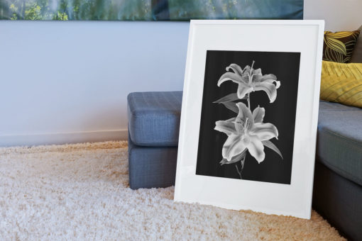 Double-Lily-print-photography-wall-art-galliani-collection-living-room-decor