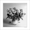 GALLIANI COLLECTION-ROSES