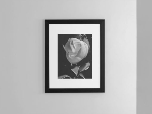 Magnolia-print-photography-wall-art-galliani-collection-framed