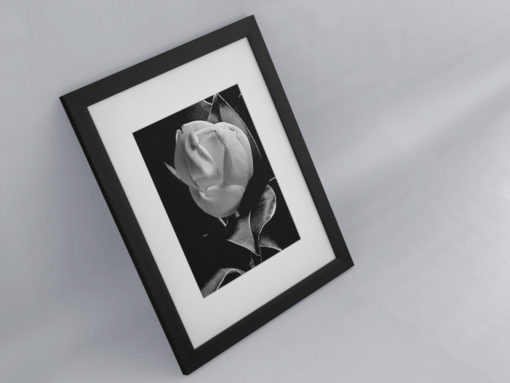 Magnolia-print-photography-wall-art-galliani-collection-framed-angled