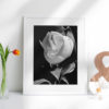 Magnolia-print-photography-wall-art-galliani-collection-home-decor