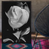 Magnolia-print-photography-wall-art-galliani-collection-living-room-decor