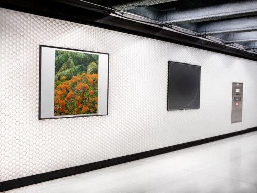 GALLIANI-COLLECTION-UM-Tree-Blossom-Art-Gallery-Photo-30-2740-ds