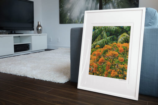 GALLIANI-COLLECTION-UM-Tree-Blossom-Fine-Arts-Photography-Framed-30-2740-ds