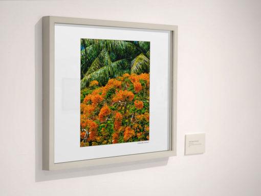 GALLIANI-COLLECTION-UM-Tree-Blossom-Wall-Art-Home-Decor-30-2740-ds