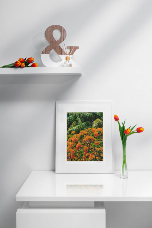GALLIANI-COLLECTION-UM-Tree-Blossoms-Fine-Arts-Photography-30-2740-ds