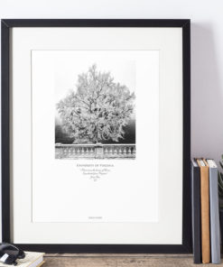 011-GALLIANI-UVA-GinkgoTree-Wall-Art-Framed-Black