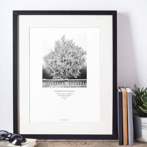 011-GALLIANI-UVA-GinkgoTree-Wall-Art-Framed-Black