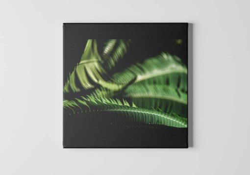 Fern-Leaves-Curling-Canvas-Wall-Art-Decor-black-mount