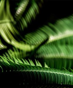 Fern-Leaves-Curling-Canvas-Wall-Decor