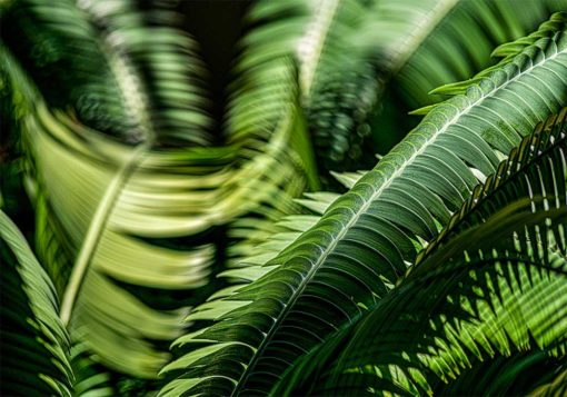 GALLIANI-COLLECTION-Ferns-2833