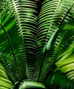 GALLIANI-COLLECTION-Ferns-2834