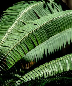 fern-leaf-wall-art-decor-canvas-photography