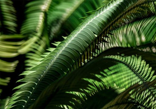 fern-leaves-photography