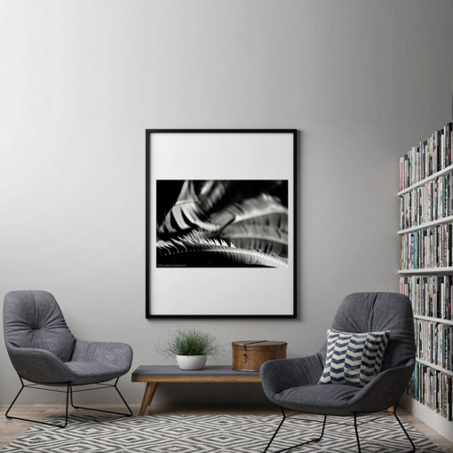 Fern-Plant-Leaves-Resting-Canvas-Wall-Art-Black-Frame Black & White Photography