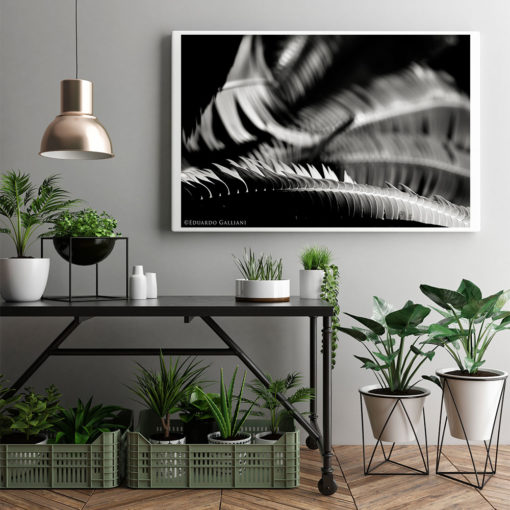 Fern-Plant-Leaves-Resting-Canvas-Wall-Art-Mount