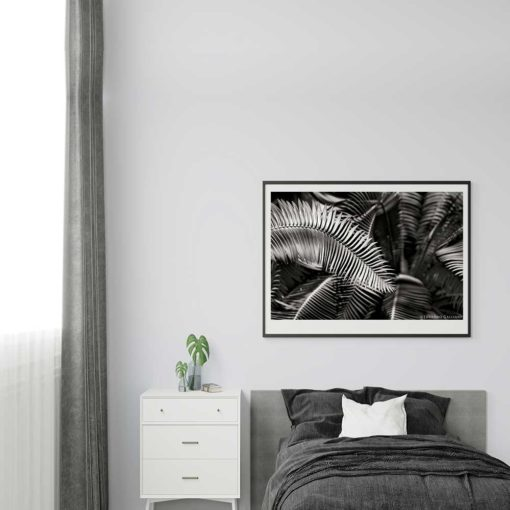 Fern-Plant-Standing-Leaves-Black-&-White-Canvas-Wall-Art black and white photography