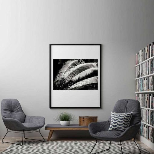 Fern-Plant-Standing-Leaves-Black-&-White-Canvas-Wall-Art-Black-Frame black and white photography