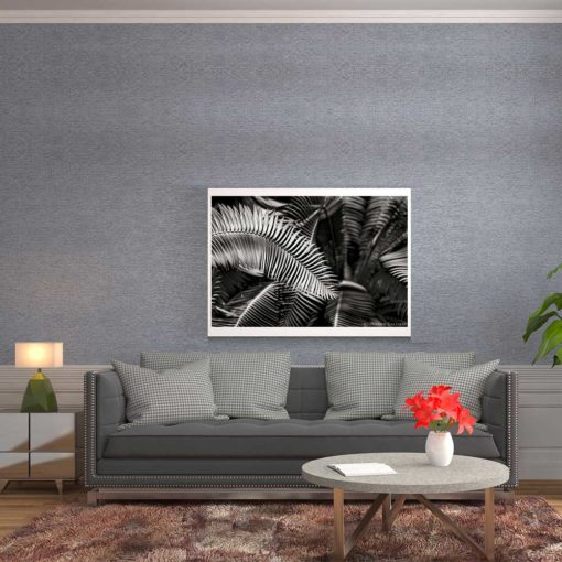 Fern-Plant-Standing-Leaves-Black-&-White-Canvas-Wall-Art--Mounted black and white photography