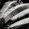 GALLIANI-Ferns-bw-2830