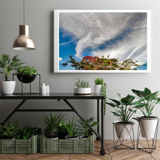 royal-poinciana-tree-blooms-canvas-wall-art
