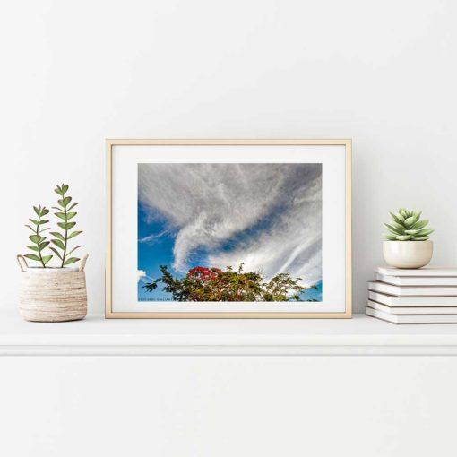 royal-poinciana-tree-blooms-canvas-wall-art-decor